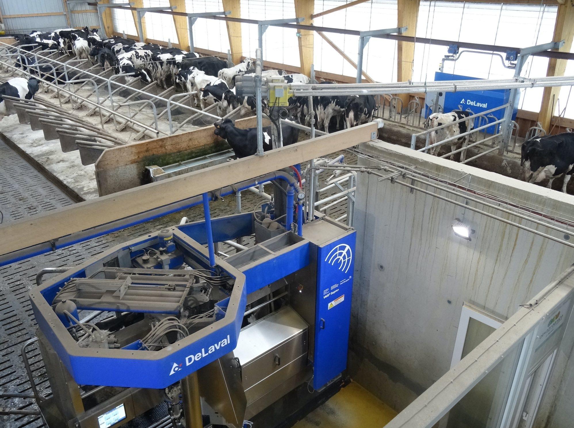 Avec la robotisation, le monotoring des troupeaux est l'autre développement attendu de la connectivité dans le secteur de l'élevage (Crédit photo : R. Lecocq)