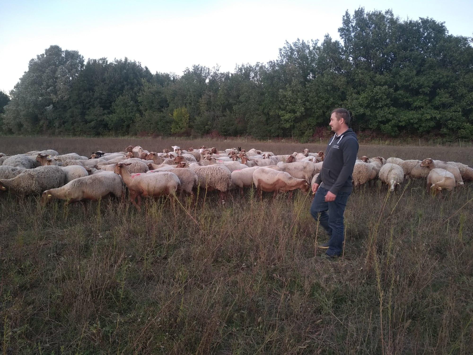 Arnaud Brémond, jeune éleveur d'ovins et de bovins dans les gorges du Verdon (Var) (Crédit photo : Manon Brémond)